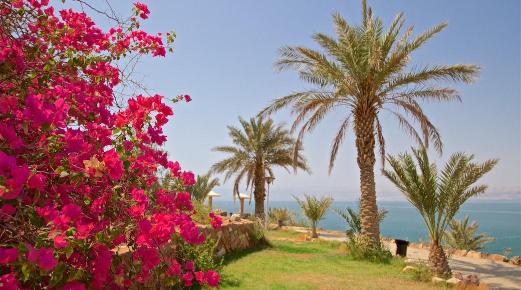 Sweimeh qui includes fleurs sauvages, vues littorales et parc