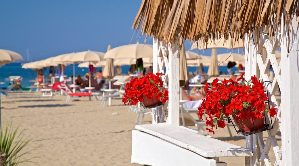 Rivabella caratteristiche di fiori di campo e spiaggia