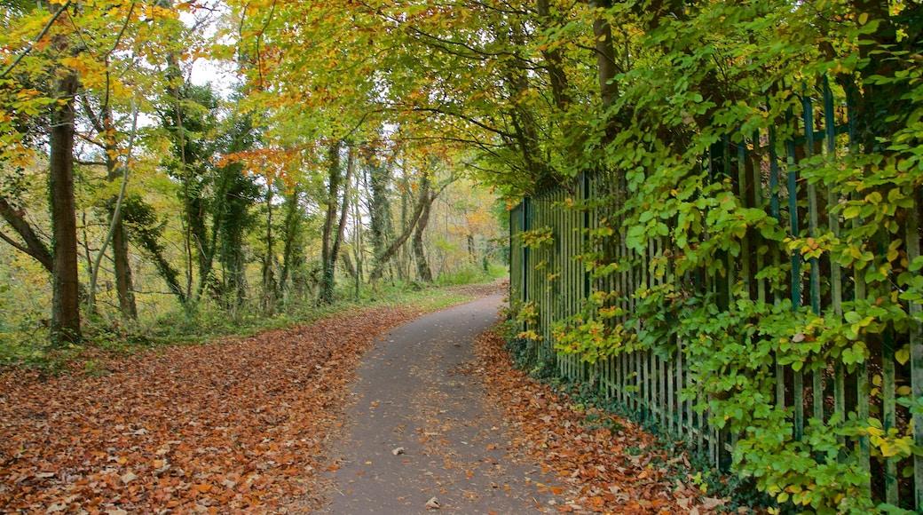 Telford Town Park das einen Park und Herbstfarben