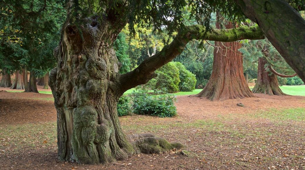 Coventry montrant jardin