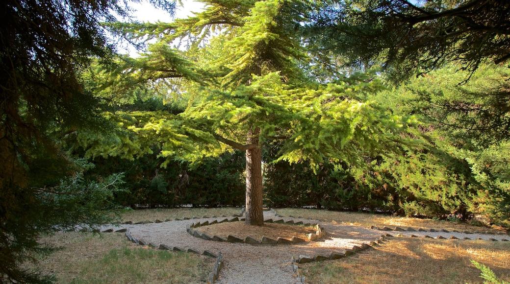 Villa Comunale dei Cappuccini das einen Garten
