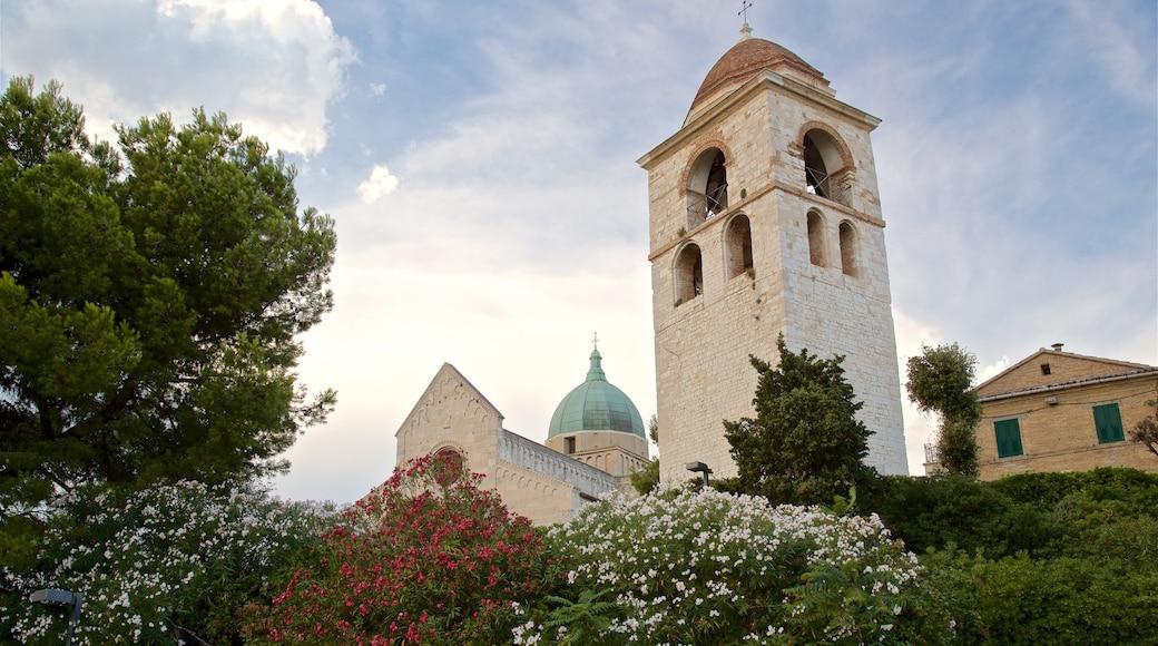 Cattedrale di San Ciriaco caratteristiche di oggetti d\'epoca e fiori di campo