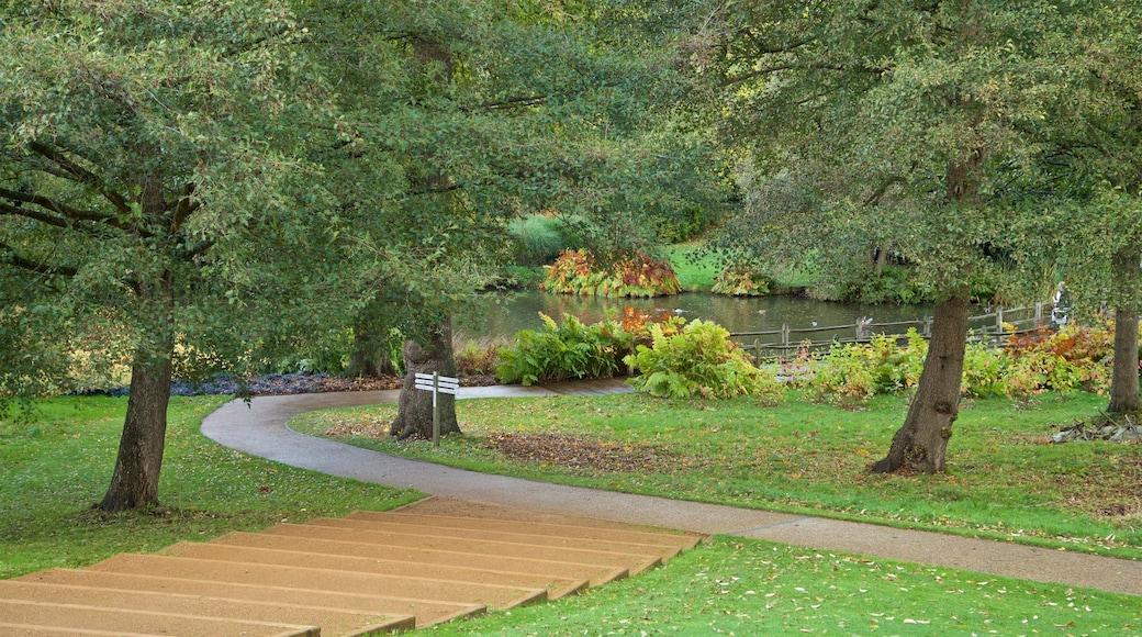 Savill Garden showing a pond and a garden