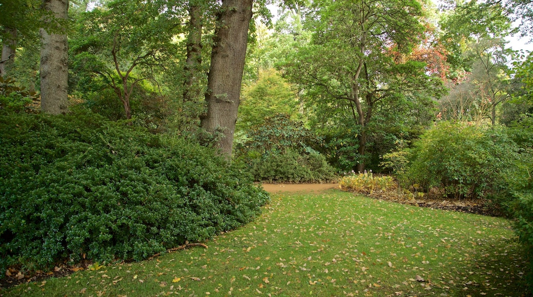 Savill Garden showing a park