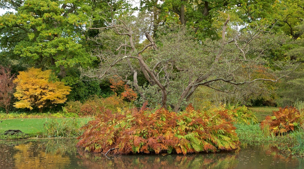 Savill Garden which includes a garden, autumn leaves and a pond