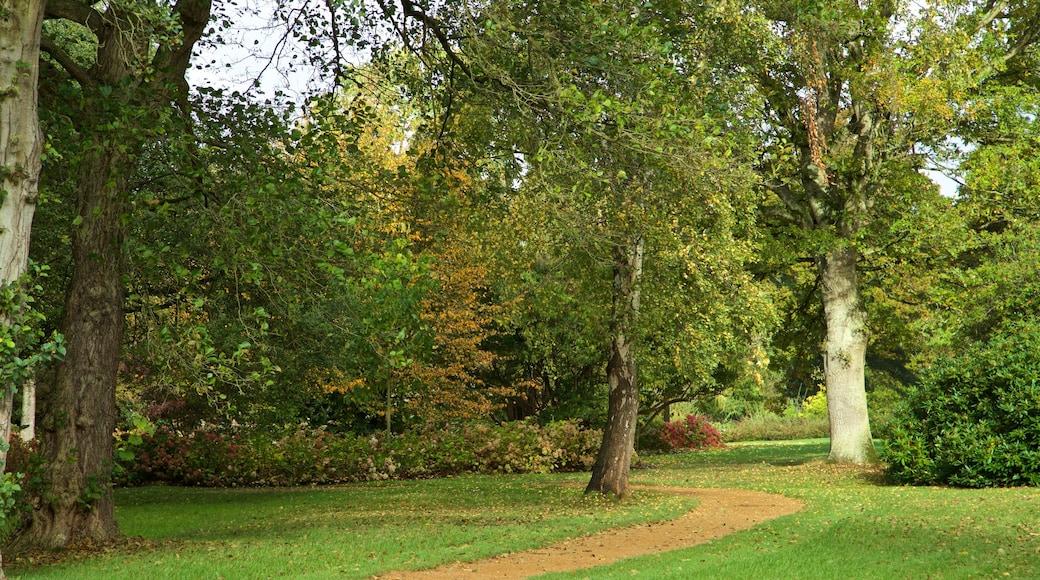 Savill Garden featuring a park