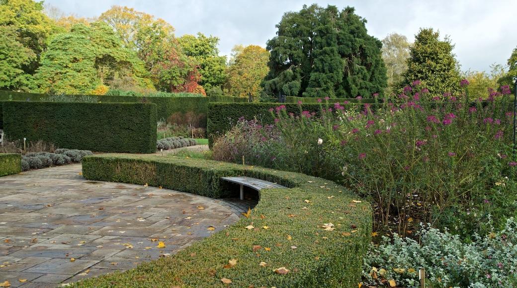Savill Garden featuring a park and wild flowers