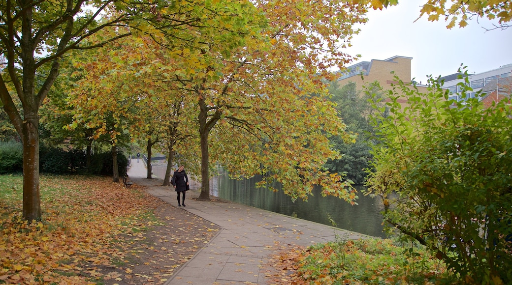 Kennet & Avon Canal showing a park and autumn leaves as well as an individual female
