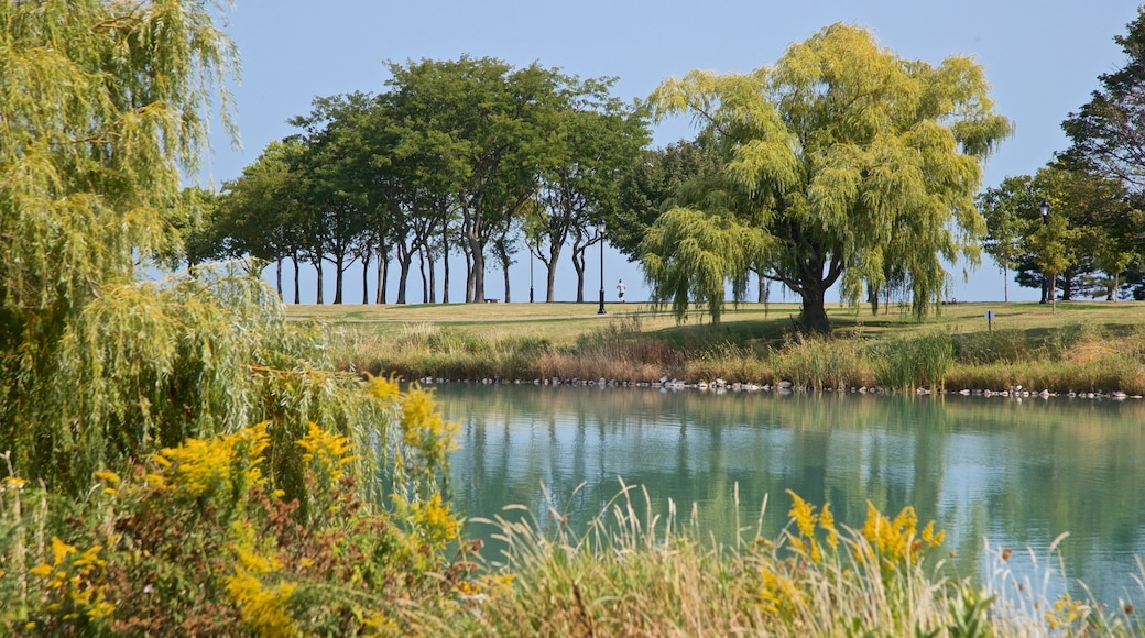 Northwestern University which includes a park and a lake or waterhole