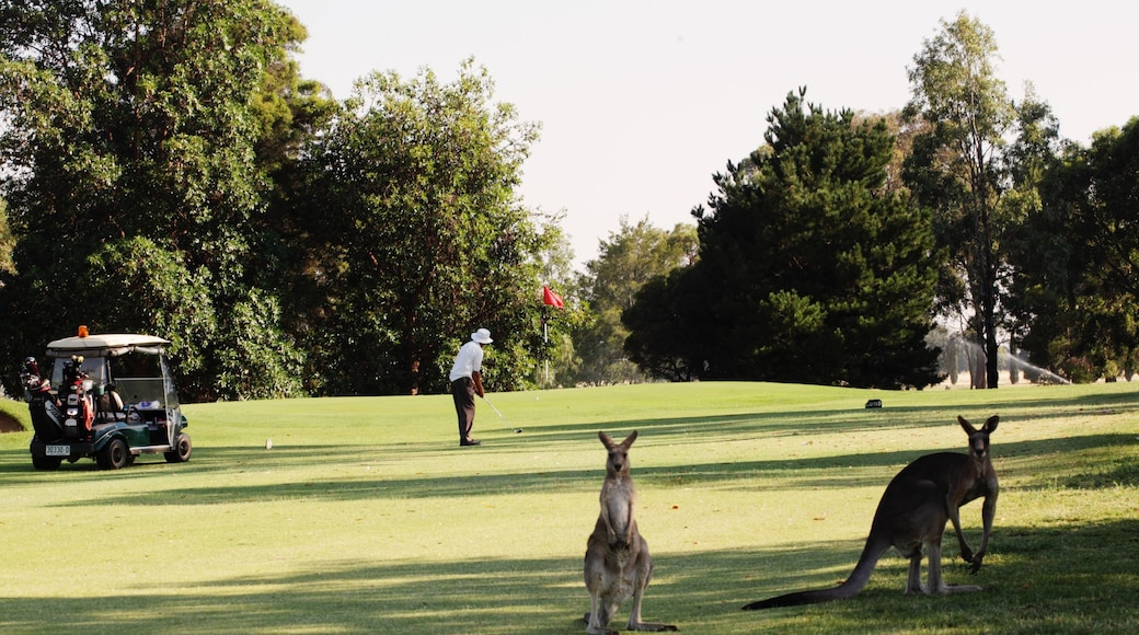 Cobram showing golf and cuddly or friendly animals as well as an individual male