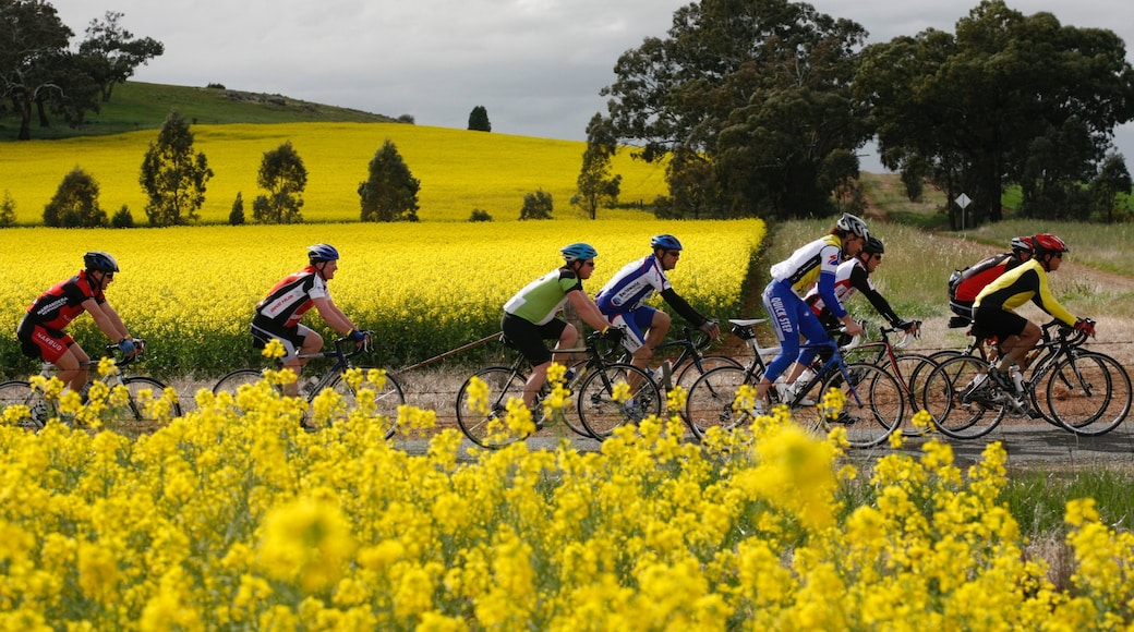Shepparton which includes road cycling and wild flowers as well as a small group of people