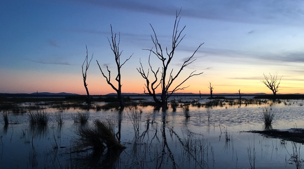 Benalla which includes a sunset, landscape views and wetlands