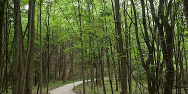 Mt. Pisgah Dune Boardwalk which includes forest scenes and a garden