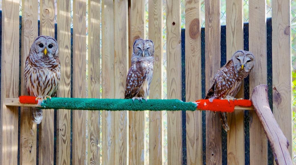 卡羅來納州猛禽中心 其中包括 鳥類 和 動物園裡的動物