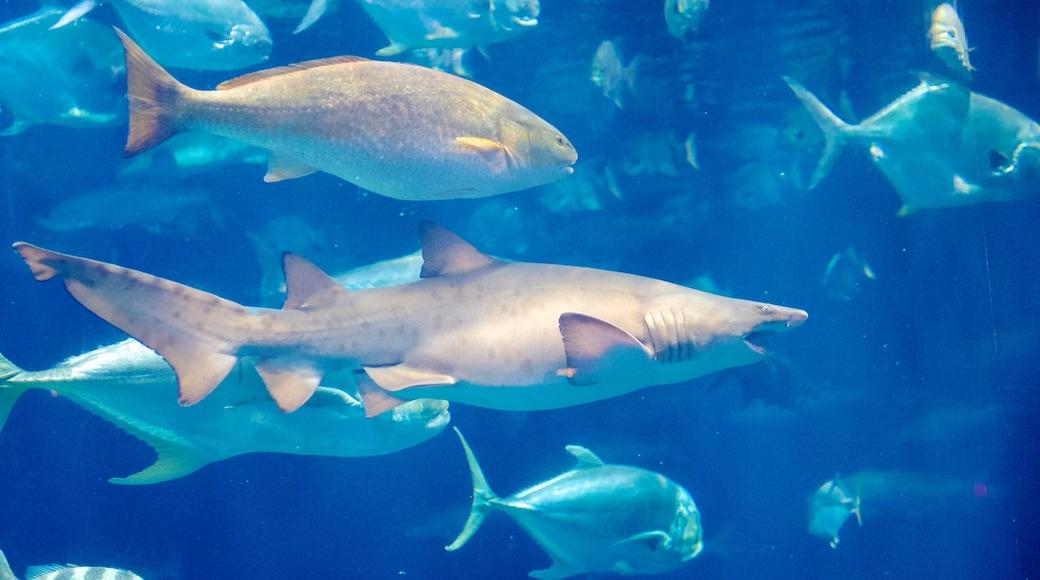 South Carolina Aquarium que inclui vida marinha