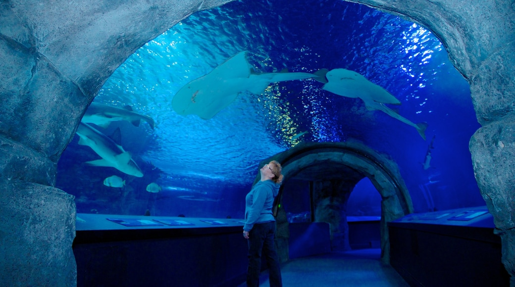 Newport Aquarium which includes marine life and interior views as well as an individual female