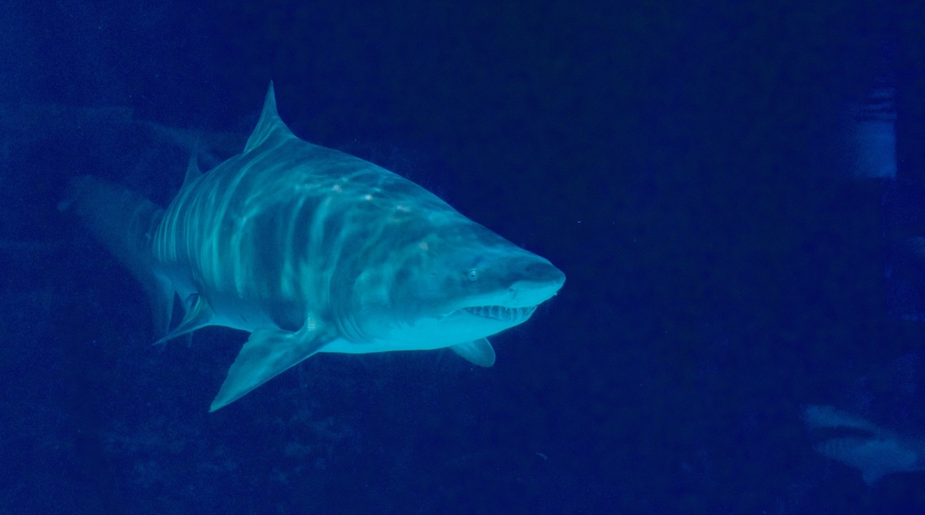 뉴포트 수족관 을 특징 해양 생물