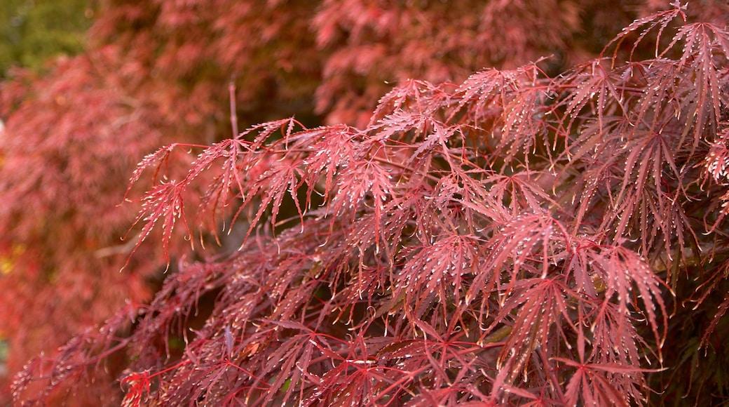 크론 온실 이 포함 야생화 과 가을 색감