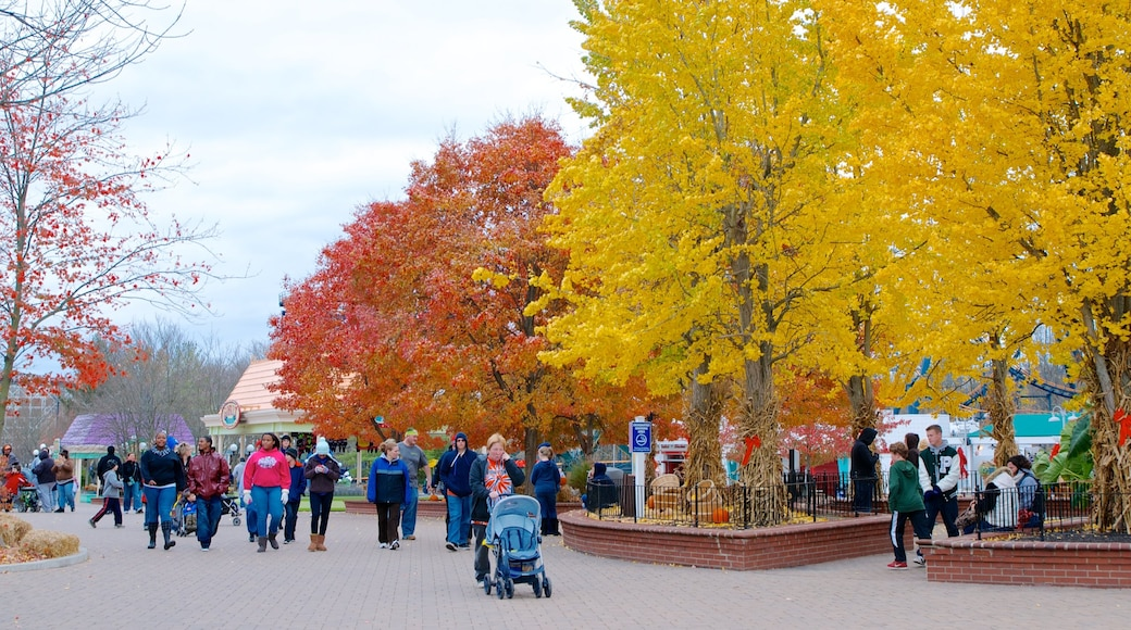 Kings Island featuring fall colors and a park as well as a large group of people