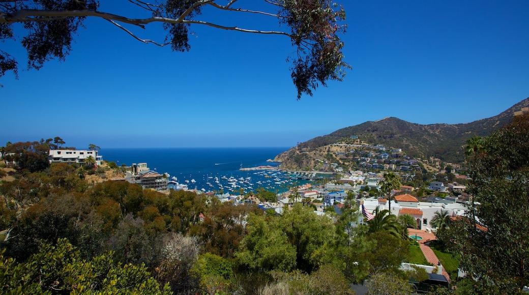 Catalina Island presenterar en kuststad och en hamn eller havsbukt