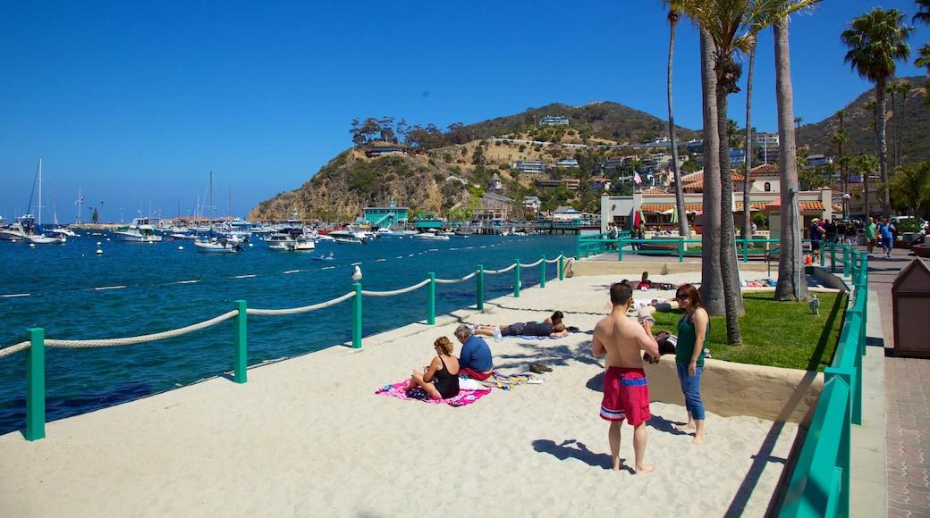 Catalina Island som visar tropisk natur, en sandstrand och en kuststad
