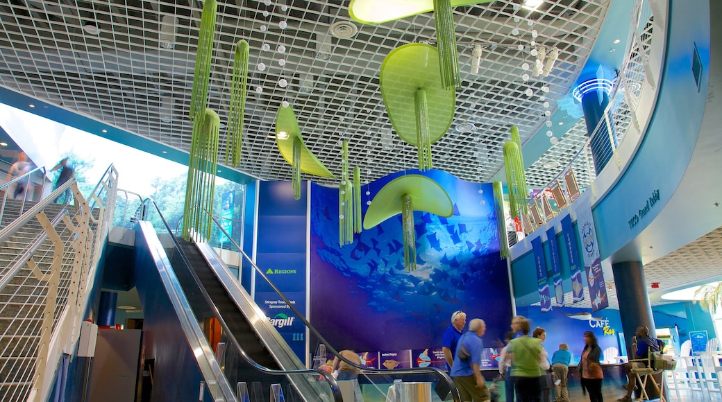 Florida Aquarium showing interior views and marine life