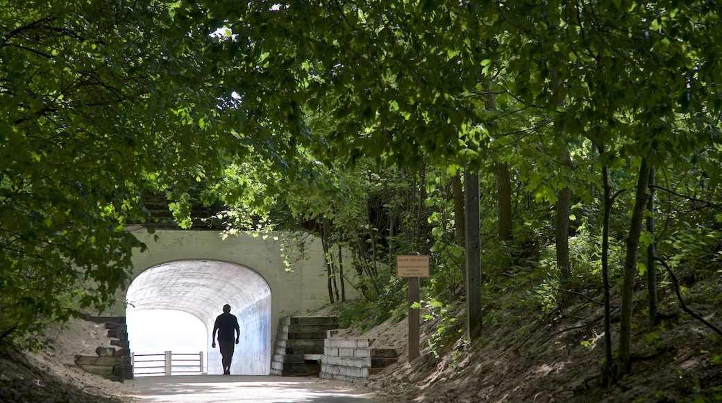 Tunnel Park which includes a garden as well as an individual male