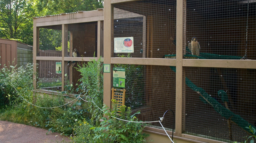 Leslie Science Center featuring zoo animals and bird life