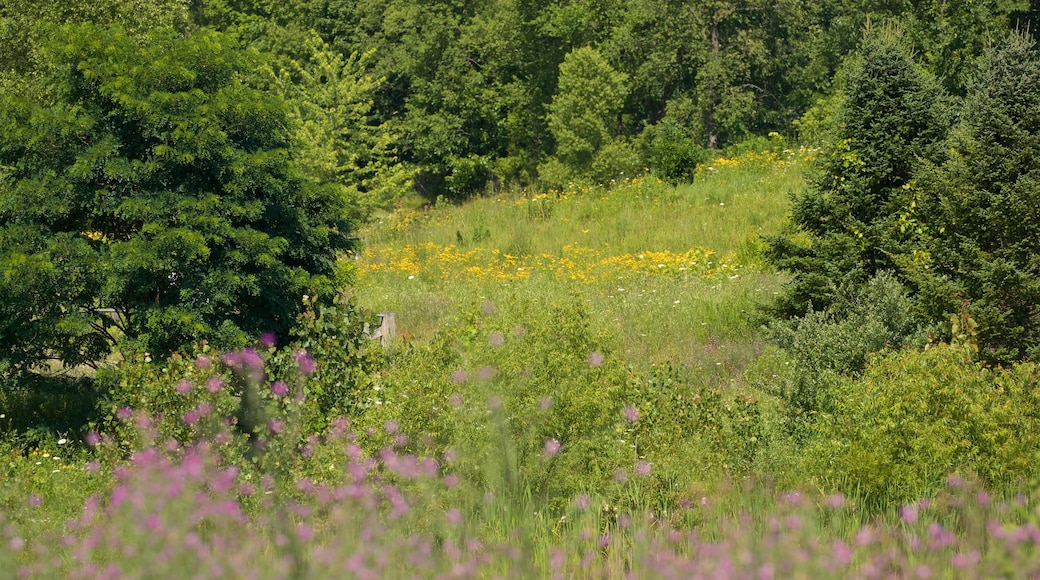 Markin Glen County Park featuring wild flowers and tranquil scenes