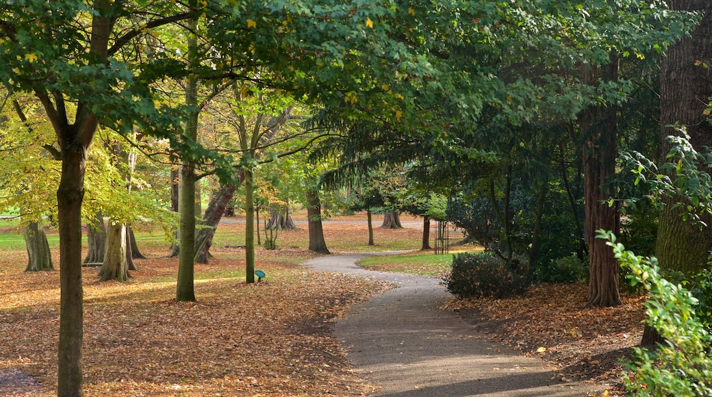 Ipswich which includes autumn colours and a garden