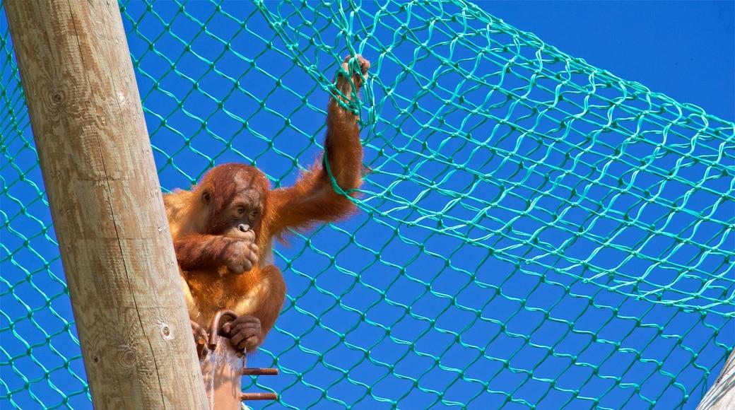 Jersey Zoological Park welches beinhaltet niedliche oder freundliche Tiere und Zootiere