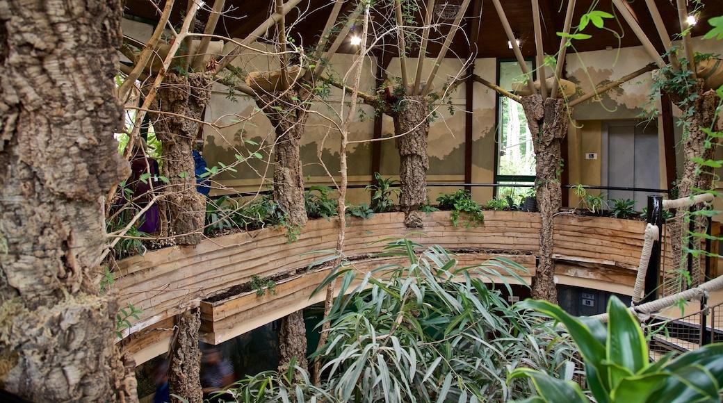 Jersey Zoological Park mit einem Park