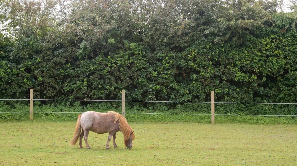 aMazin! Adventure Park & Maze mit einem Farmland und Landtiere
