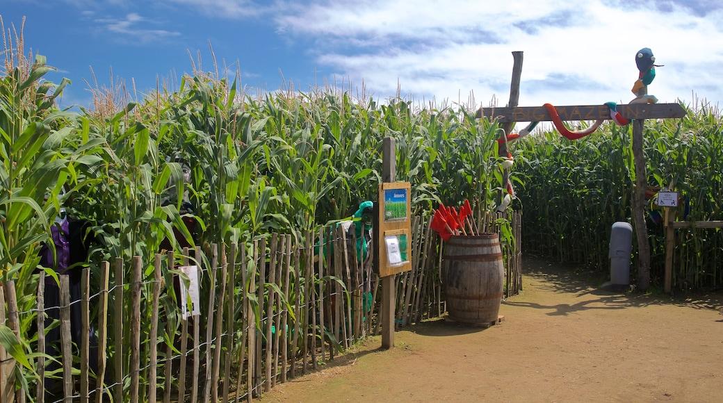 aMazin! Adventure Park & Maze welches beinhaltet Farmland