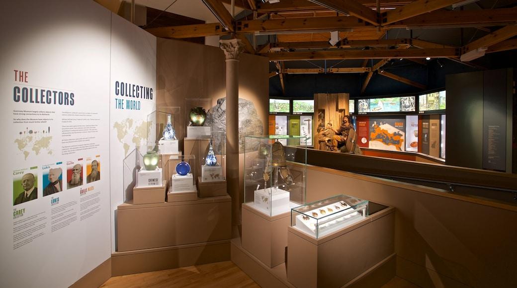 Guernsey Museum and Art Gallery que inclui vistas internas