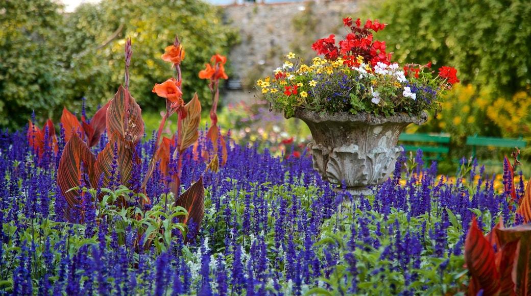 Candie Gardens caracterizando flores silvestres e flores