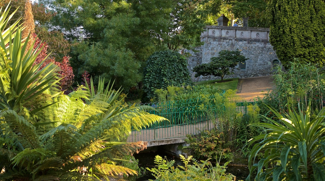 Candie Gardens mostrando um jardim