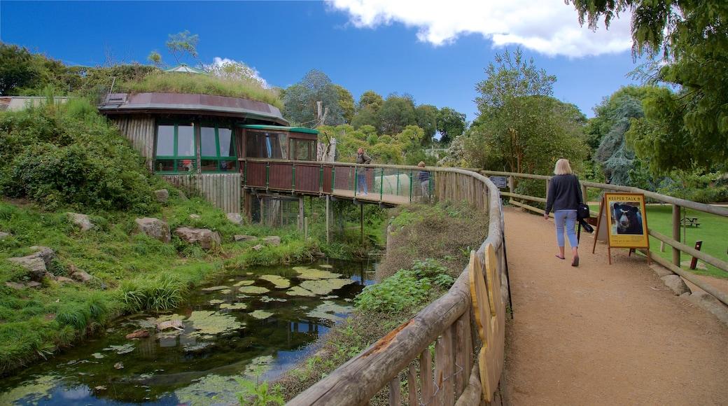 Jersey Zoological Park das einen Brücke und Teich sowie einzelne Frau
