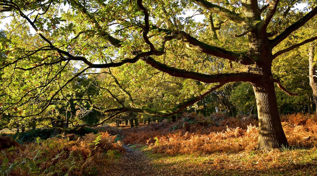 Richmond Park which includes tranquil scenes