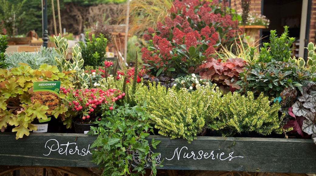 Richmond-upon-Thames showing signage and flowers
