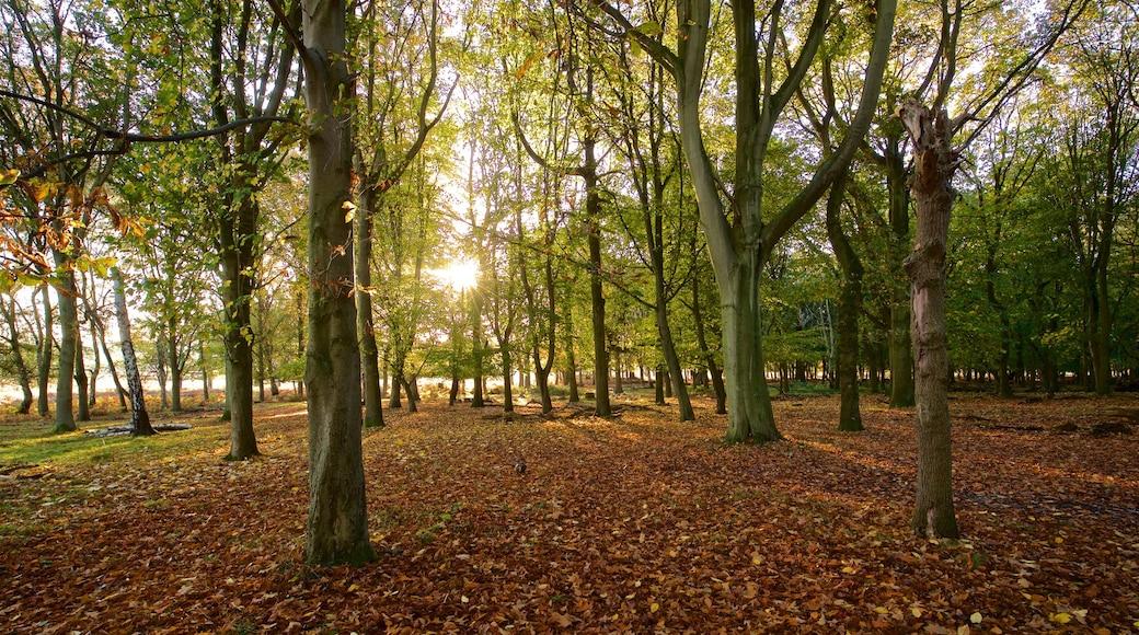 Richmond Park showing a sunset, a park and autumn leaves