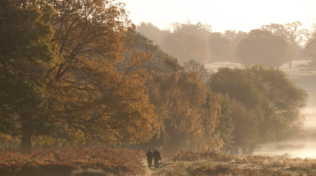 Richmond Park which includes tranquil scenes as well as a couple