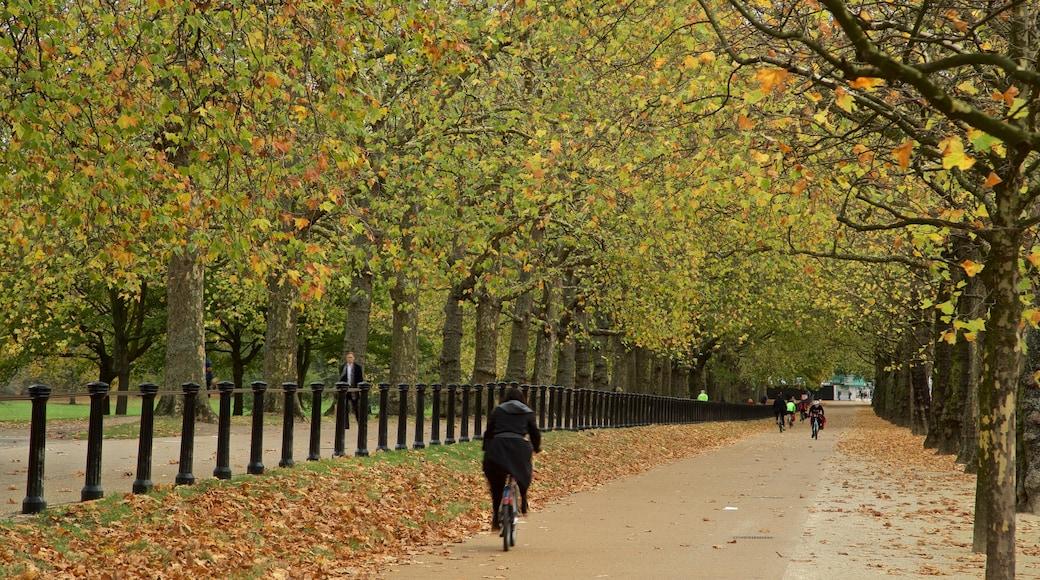 Green Park welches beinhaltet Park, Herbstfarben und Fahrradfahren