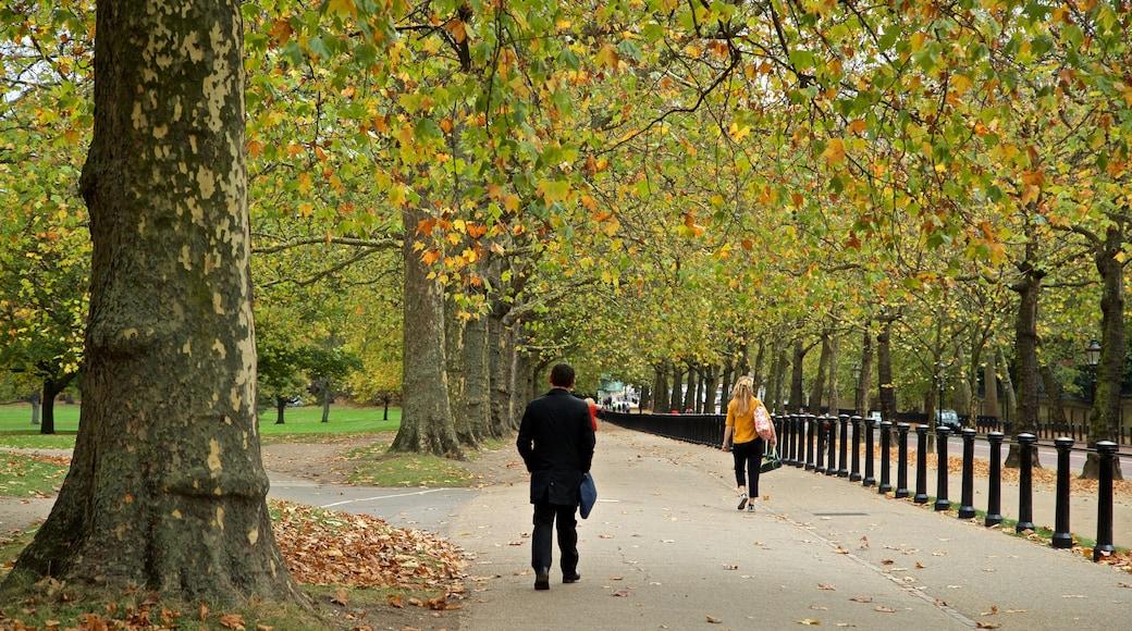 Green Park welches beinhaltet Garten und Herbstfarben sowie einzelner Mann