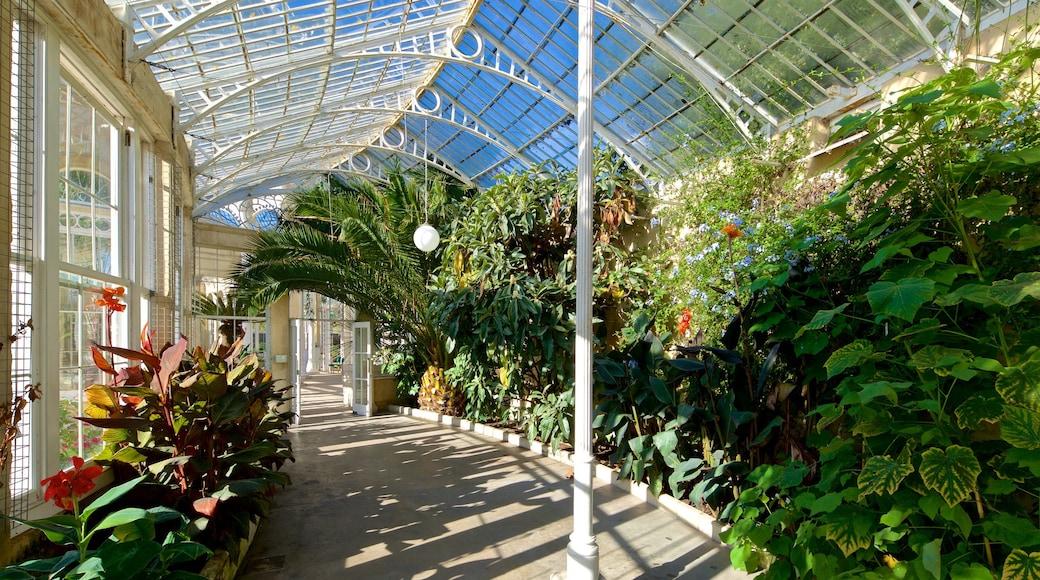 Syon Park which includes interior views and a garden