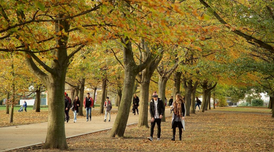 Greenwich Park mit einem Herbstfarben und Garten sowie Paar