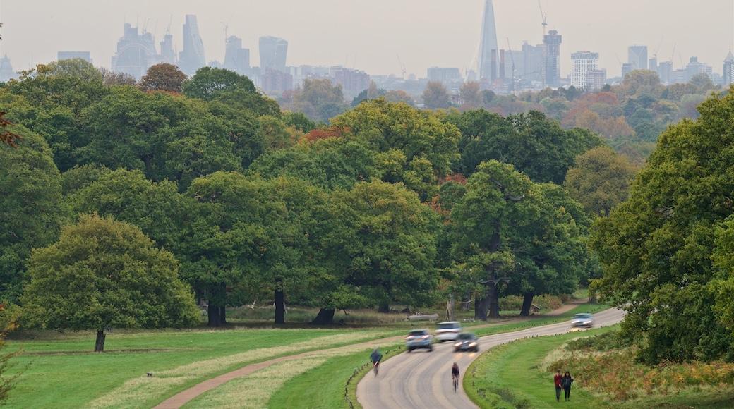 Richmond Park which includes landscape views and a park