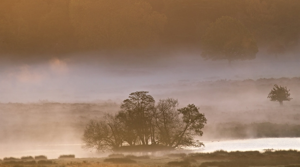 Richmond Park featuring a pond, tranquil scenes and mist or fog