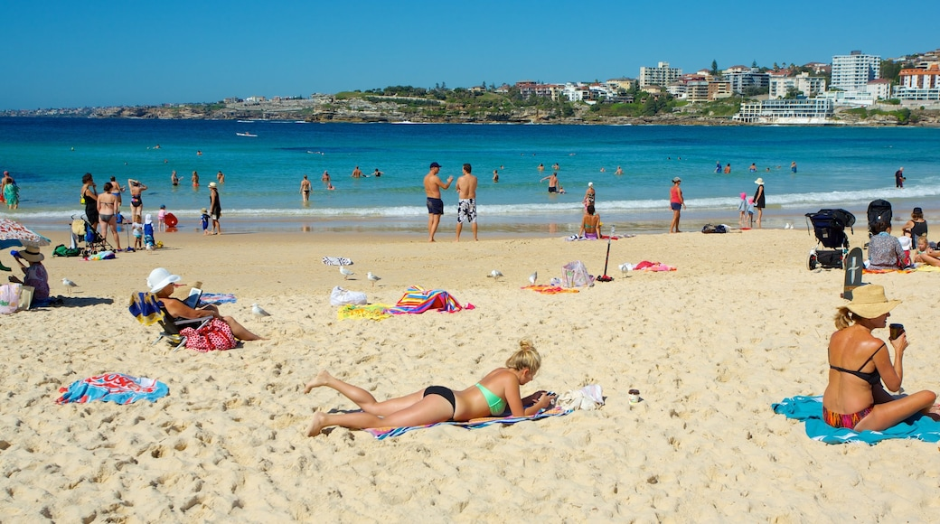 Bondi Beach showing a beach and tropical scenes
