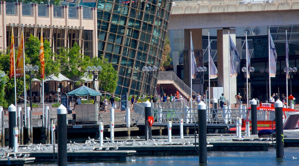 Darling Harbour featuring a bay or harbor